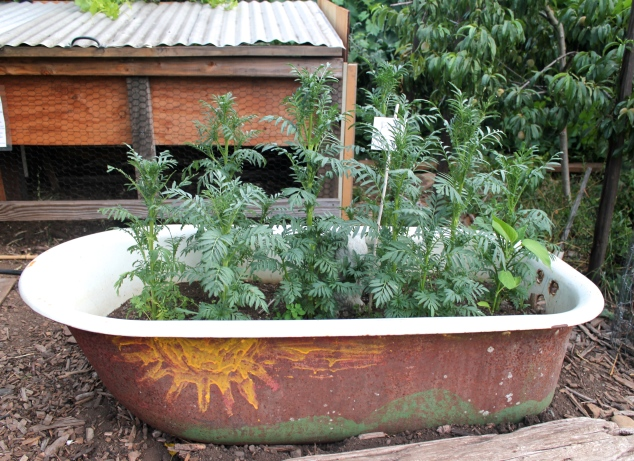 Bathtub garden planter