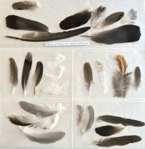 Feathers, 1